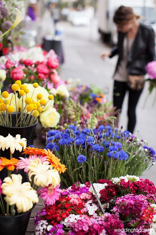 Насекомые домашних цветов